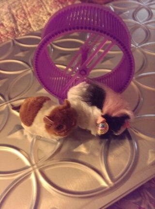 Zhu Zhu Pets with Hamster wheel! Let the kids chase these adorable guys so you get a brake
