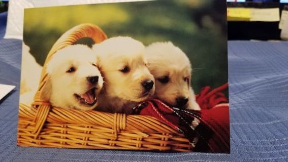 BASKET OF PRETTY PUPPIES CARD W/ ENVELOPE