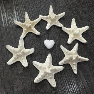 6Pcs Natural Starfish Sea Star Shell Aquarium Wedding Landscape