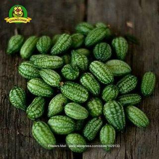 Cucamelon Seeds 100