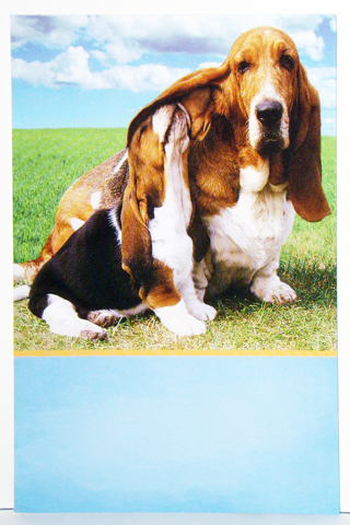 Free basset hound birthday card by tomato birthday listia basset hound birthday card by tomato bookmarktalkfo Gallery