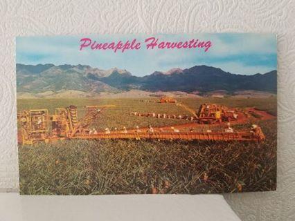 PINEAPPLE HARVESTING postcard USA