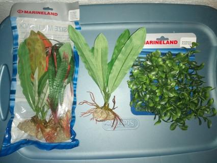 Aquarium Plants x10
