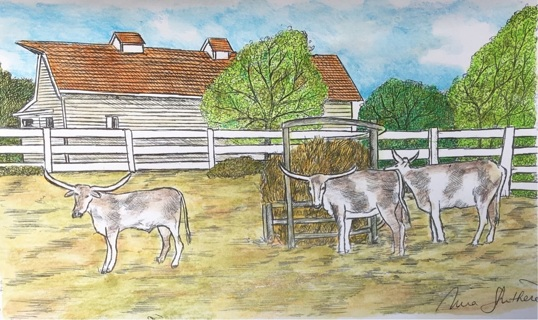 "WHITE BARN WITH LONGHORNS - 5 x 7"" Art Card by artist Nina Struthers - GIN ONLY"
