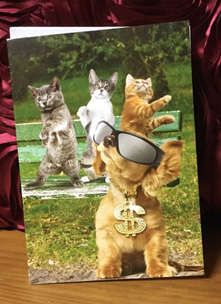 Dancing Cats & Dog with Sunglasses Birthday Card & Envelope