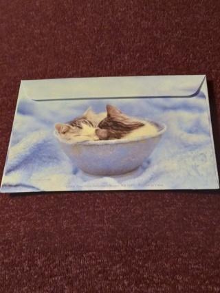 Envelopes - Kittens In A Bowl