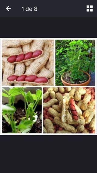 20 peanut seeds