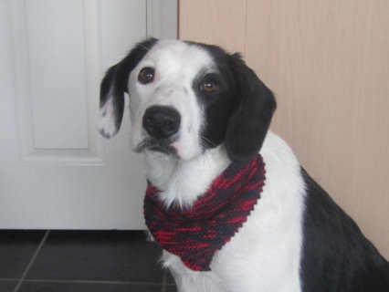 Free Knit Dog Bandana Pattern Dog Listia Com Auctions For