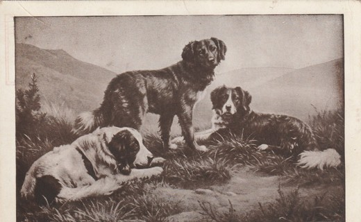 Vintage Used Postcard: 1912 The Three Friends...Dogs