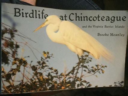 Birdlife at Chincoteague : And the Virginia Barrier Islands by Brooke Meanley...