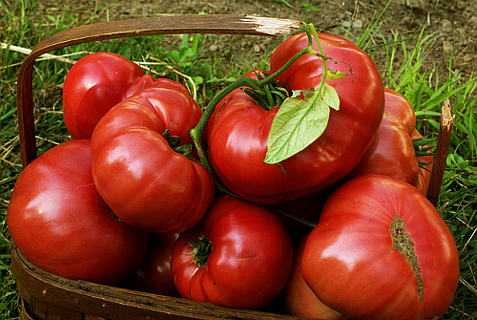 Organic Heirloom Brandywine Tomato 20 Seeds