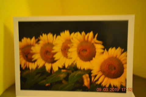 """****ROW OF SUNFLOWERS """"THANK YOU"""" CARD W/ENVELOPE***FREE SHIPPING"""