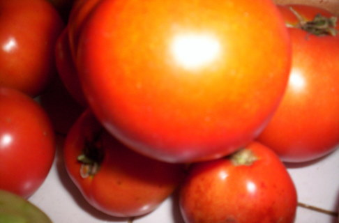 20+ Heirloom Red Tomato Seeds