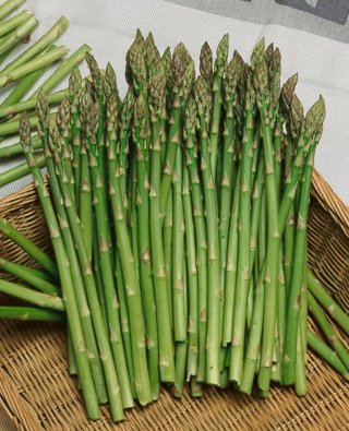 12 plus Mary Washington Asparagus seed
