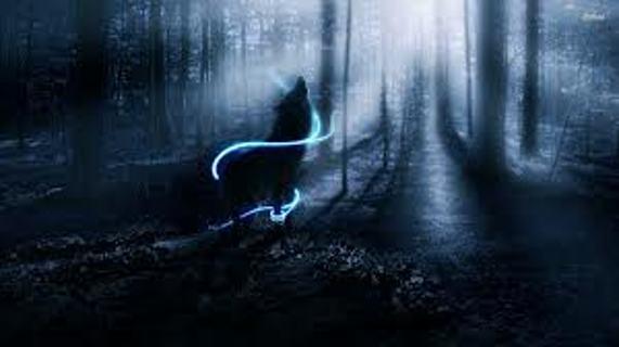 Free Spirit Wolf Wallpaper Other Art Listia Com