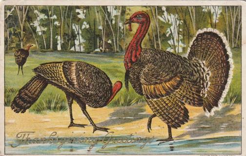 Vintage Used Postcard: Embossed: 1909 Thanksgiving Greetings