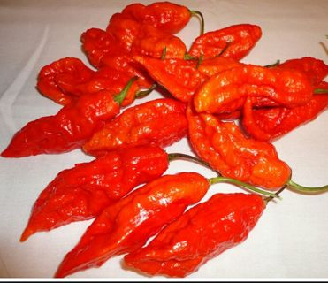 10 + Ghost peppers seeds
