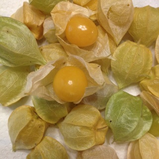 Aunt Molly's Ground Cherries 25+ seeds