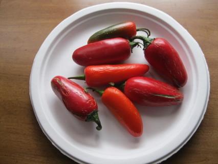 10+ Hot Jalapeno Pepper Seeds