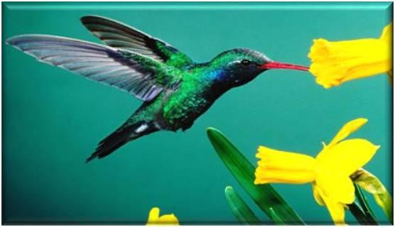 Hummingbird Refrigerator Magnet