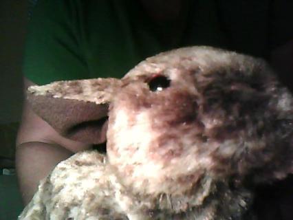 Stuffed Bunny New