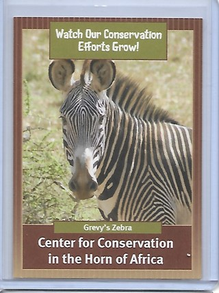 Saint Louis Zoo Center for Conservation in the Horn of Africa Card Grevy's Zebra