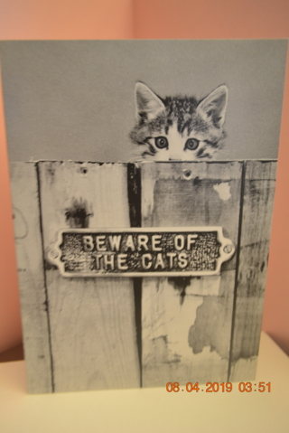 "****""BEWARE OF THE CATS"" BLANK CARD W/ENVELOPE***FREE SHIPPING"