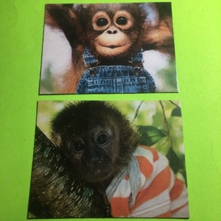Monkey Magnets!