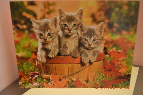 """****""""THREE LITTLE KITTENS IN A BUSHEL BASKET"""" BLANK CARD W/ENVELOPE"""