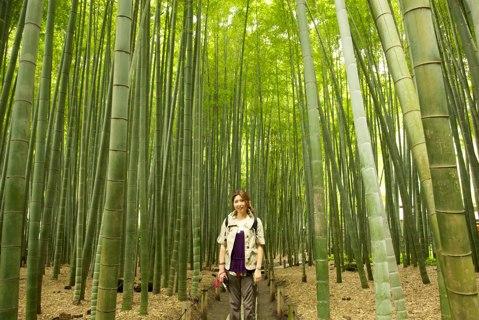 10 Rare Moso Bamboo Seeds