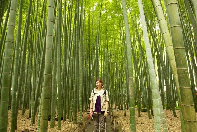 Free 10 rare moso bamboo seeds gardening seeds bulbs for Moso bamboo prezzi