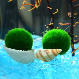 Nano Marimo Moss ball-monkey aquarium plant fish tank betta sea triops-java E9H5