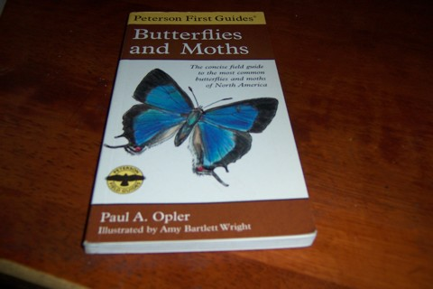 Peterson First Guides Butterflies and Moths