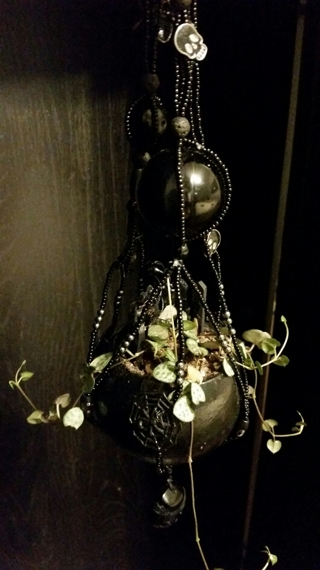 STRING OF HEARTS (Ceropegia woodii) Fully Rooted in Handmade BLACK FAIRY GARDEN  *Packed with Black!