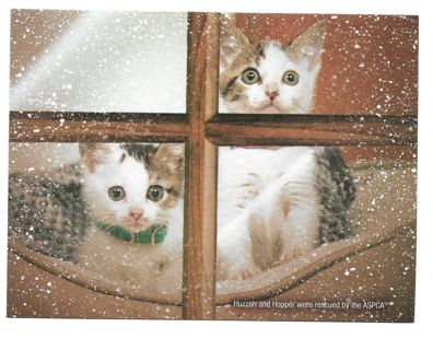 Christmas Card With Envelope with Kittens