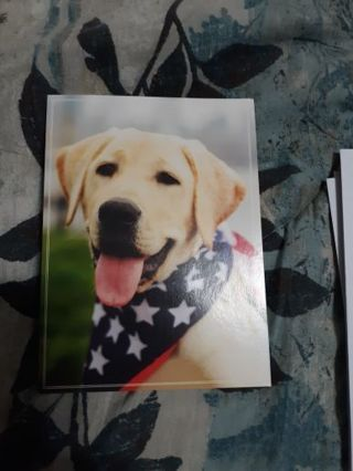 Five Doggone Greeting Cards With Matching Envelopes