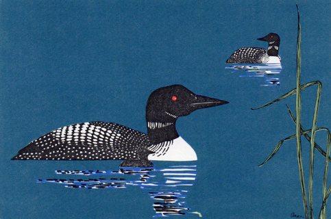Vintage 4 x 6 Unused Postcard: Duck