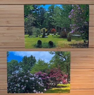 Cemetery Rhododendrons ~ 2 Original Photographs  500 PTS = $1