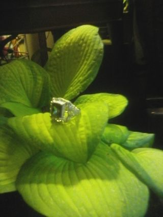 BN Irodesent Stone Ring