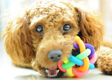 Puppy Pet Dog Colorful Training Play Ball Toy