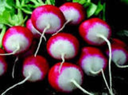15 Sparkler Tip Radish Seeds