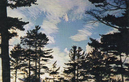 Vintage Used Postcard: Feathery Haloes at Sundown in MIchigan