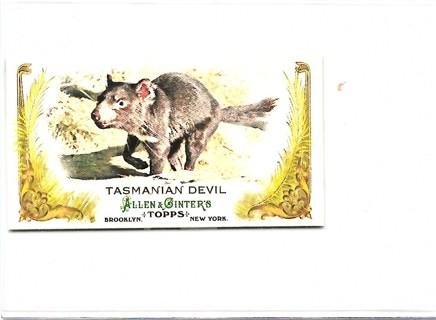 2011 Topps Allen and Ginter Mini Animals in Peril #AP19 Tasmanian Devil