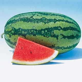 20 sweet beauty watermelon seeds
