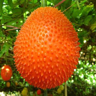 10Pcs Gac Fruit Raress Momordica Cochinchinensis Seeds Exotic Health Benefit