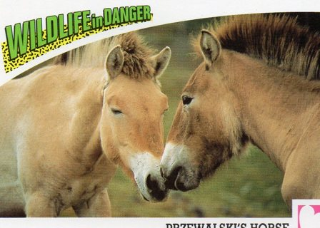 World Wide Fund for Nature: Wildlife In Danger Trade Card: Przewalski's Horse