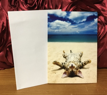 Striped Kitten Laying on Beach Blank Card with Envelope