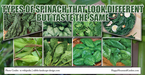 Spinach Collection