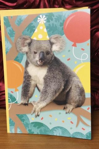 Koala Bear Birthday Card