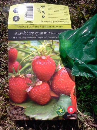 Strawberry quinault (roots)